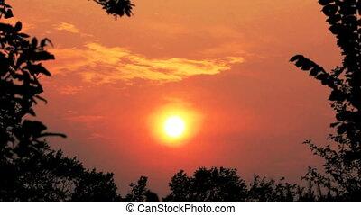 лес, закат солнца, над