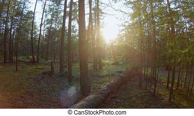 лес, кастрюля