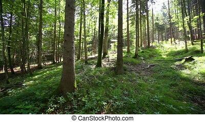 лес, панорама