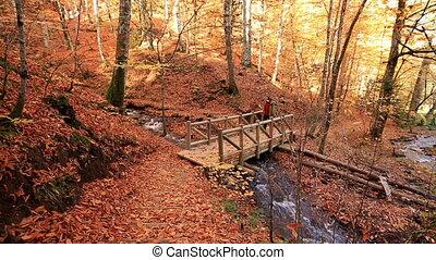 лес, поездка
