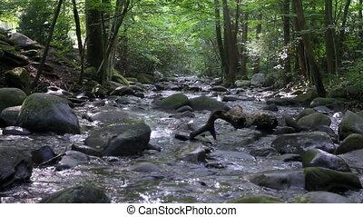 лес, поток, 7