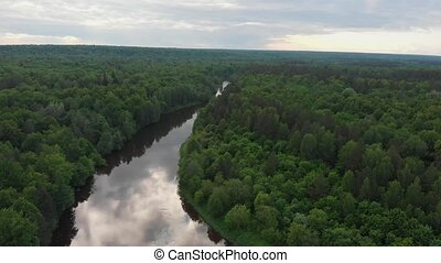 лес, -, река, хвойный, divides, пейзаж, природа