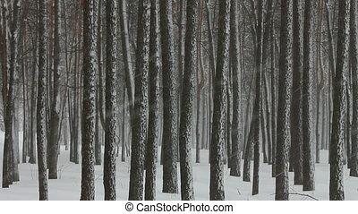 лес, снегопад, зима
