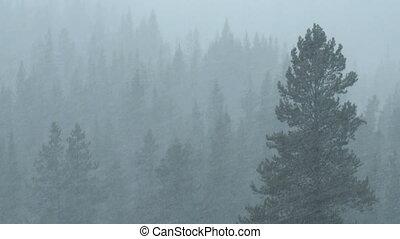 лес, снегопад