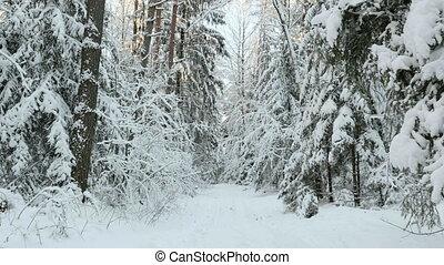 лес, снег, trees, под