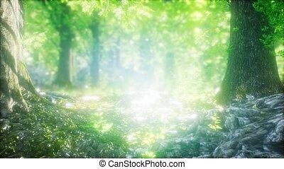 лес, туманный, rays, солнце, весна, утро
