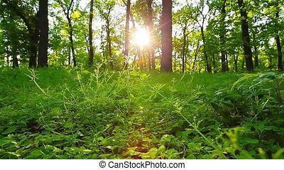 лес, утро