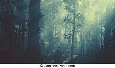 лес, черный, сосна, темно, дерево, хобот