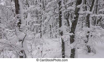 лес, covered, ветви, снег, зима