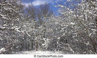 лес, falling, ветви, снег, зима