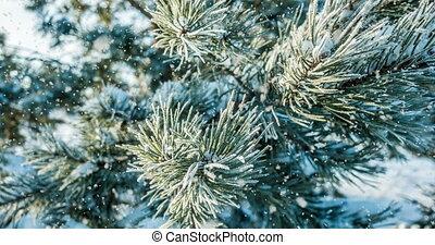 лес, falling, зима, снег