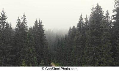 лес, fog., хвойный