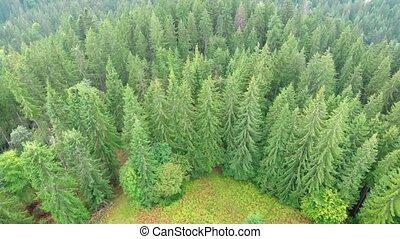 лес, mountains, пустыня, украина, карпатская, вечнозеленый