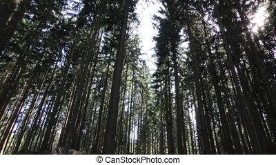 лес, trees