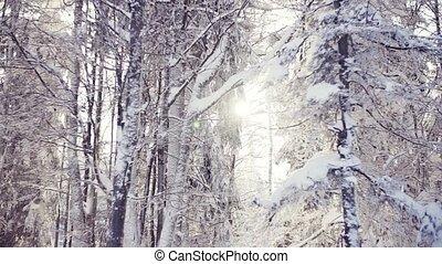 лес, trees, snow-covered, winter., хвойный