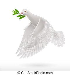 летать, голубь