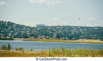 летать, лето, над, seagulls, день, slow-motion, стадо, река