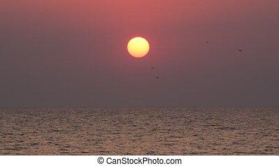 летать, море, солнце, над, поднимающийся, задний план, рассвет, birds