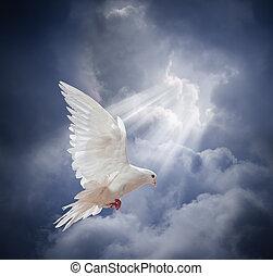 летающий, белый, голубь, на, синий, небо, задний план
