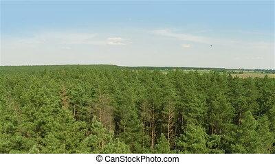 летающий, лес, сосна, над