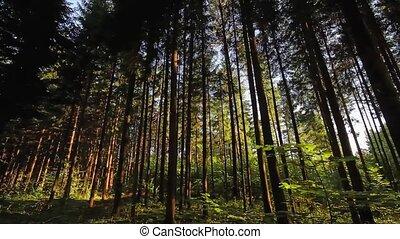 лето, лес, кастрюля, солнце