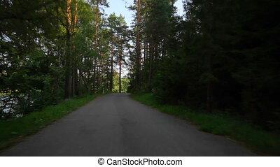 лето, лес, поездка