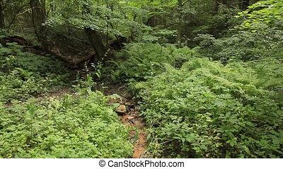 лето, лиственный, лес, кастрюля, vert