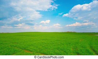 лето, пейзаж, кастрюля