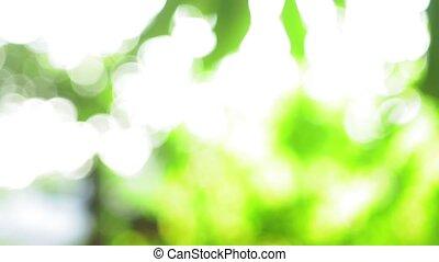 лето, пятно, bokeh, натуральный, зеленый, задний план