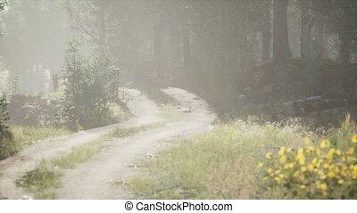 лето, туманный, стоять, sunbeams, хвойный, entering, утро