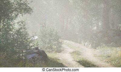 лето, туманный, утро, entering, sunbeams, хвойный, стоять