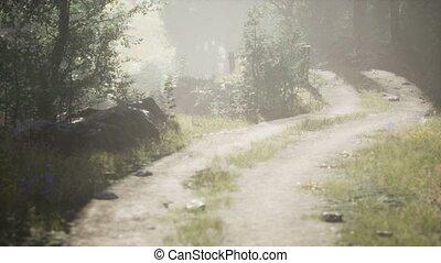 лето, утро, туманный, стоять, entering, хвойный, sunbeams
