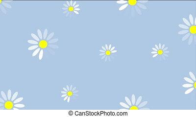 лето, цветы, видео, анимация, camomiles