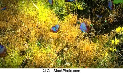 лето, butterflies, цветы