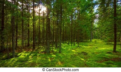 лето, time-lap, лес, солнце