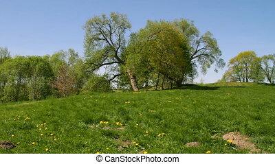 лето, trees, парк