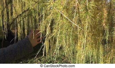 лиственница, дерево, филиал, рука