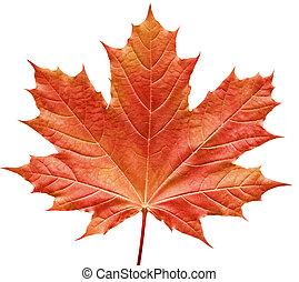 лист, красный, кленовый