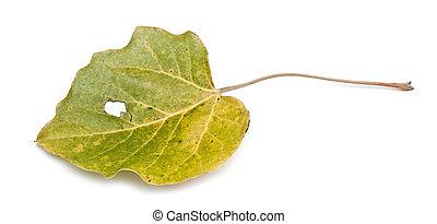 лист, осенний, красочный, isolated