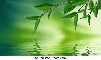 лист, отражение