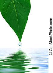 лист, and, воды, падение
