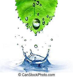 лист, isolated, воды, всплеск, зеленый, белый, drops