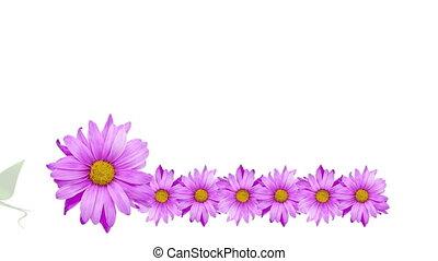 лоза, цветок, граница, вращающийся