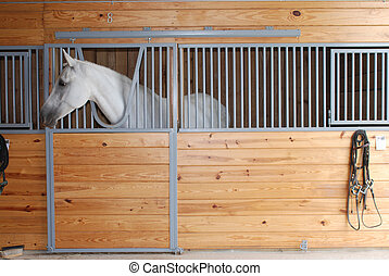 лошадь, ищу, вне, of, стойло