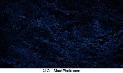 лунный свет, лесистая местность, trees