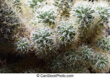 магазин, на открытом воздухе, сад, вверх, коллекция, pot., задавать, флорист, маленький, flowerpots., кактус, посмотреть