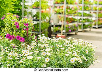 магазин, цветок, сад, центр, дом, зеленый