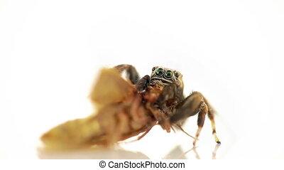 макрос, паук