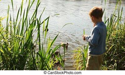 маленький, мальчик, feeds, рейс, of, уток, рядом, пруд, в,...
