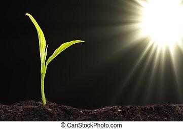 маленький, растение